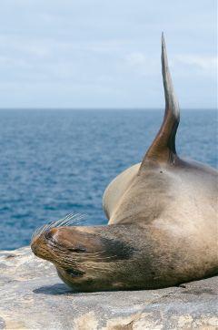 travel explore galapagos sealion wildlife