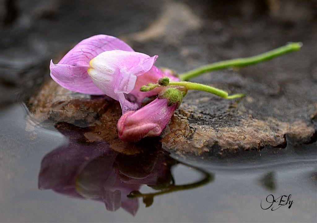 #flower  #macro #drops #nature