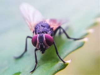 macrophotography animal photography