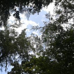 freetoedit trees sky clouds blue