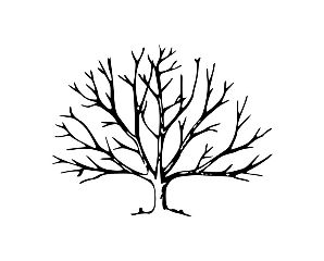 treeoflife freetoedit tree outline remixit