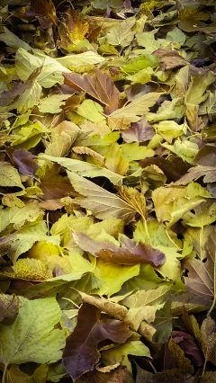 freetoedit leaf automn