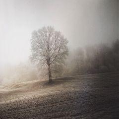 nature travel madewithpicsart tree winter