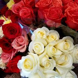 photography via flower market brightenmyday freetoedit