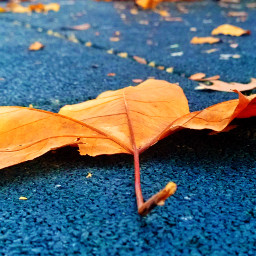 pcsinglestilllife singlestilllife pctwohues twohues pcautumnflatlay autumnflatlay
