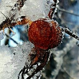 winterwonderland cold myphoto unedited winter