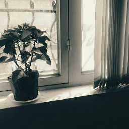 freetoedit emotions window blackandwhite photography