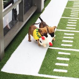 freetoedit puppybowl