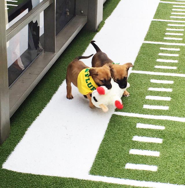 #FreeToEdit #puppybowl