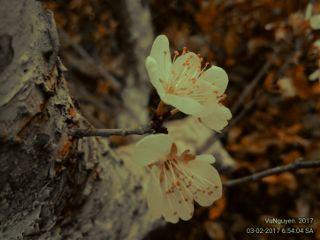 spring flower oldmode