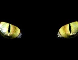 eyes cat freetoedit