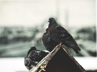 freetoedit bird anime istanbul
