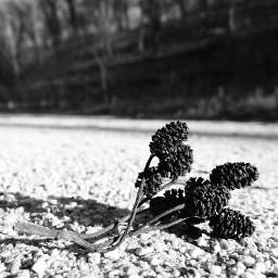 nature flowersontheground focusonforeground blackandwhitephotography tranquillity