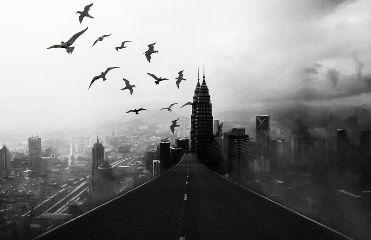 freetoedit birds buildings road bw