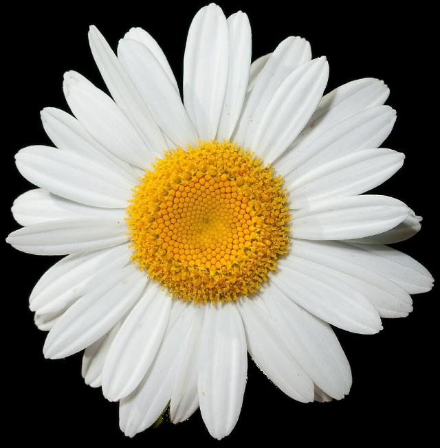#ftestickers #FreeToEdit  #flower