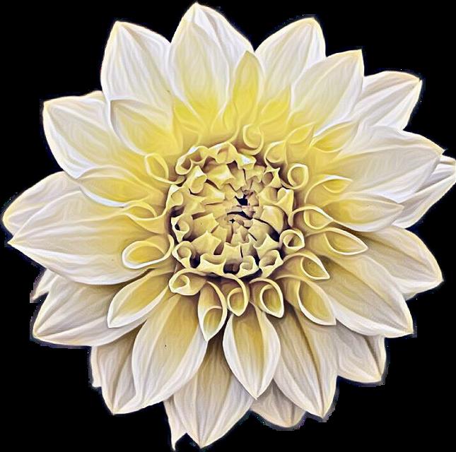 #ftestickers #flower #magiceffects #flowerstickers