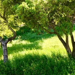 freetoedit spring green yellow nature